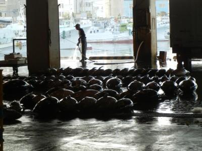 泊港内の栄町市場ではマグロがゴロゴロしていました!