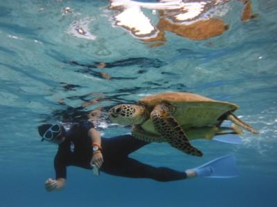 早朝、捕食に来るカメと一緒に泳ぐことから合宿の1日が始まる