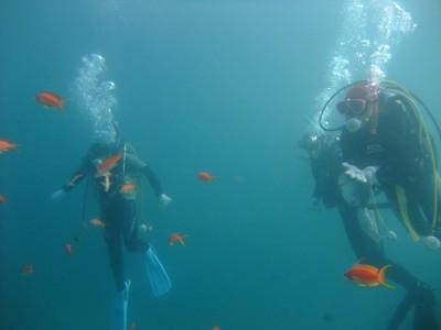 台風にも負けず、キンギョハナダイたちは元気に泳いでいます