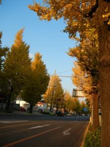 高尾駅周辺。下界はイチョウが夕日に照らされて金色に。