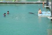 調教されたイルカたちとドルフィンスイム体験をしているゲストがいました