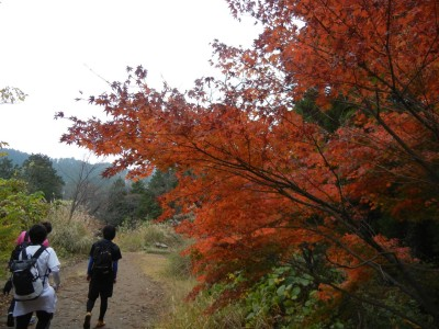 高尾山山頂からすぐのもみじ台。すでに紅葉真っ盛りでした。