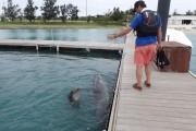 ドルフィンスイムもできる施設があり、頭の良いイルカたちが寄ってきてくれました