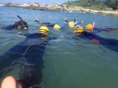 透明度が悪いなりの魚の見方、探し方は、ダイビングのガイドをして培ったテクニックだと思っています。うねりに飛ばされまいと必死に海藻にしがみつくタツノオトシゴ発見!