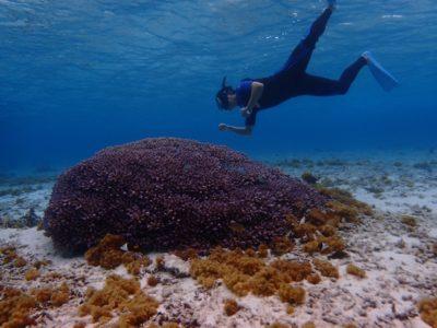 サンゴもカメも元気です
